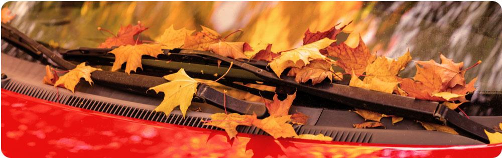 Veilig autorijden in de herfst ruit