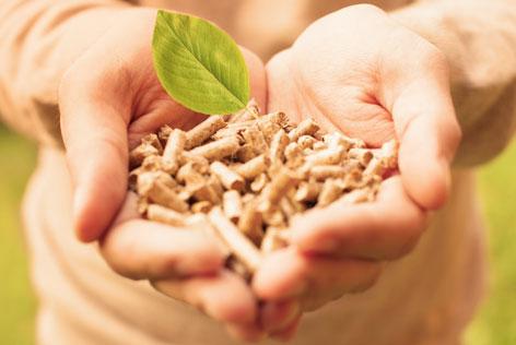 wat is biomassa