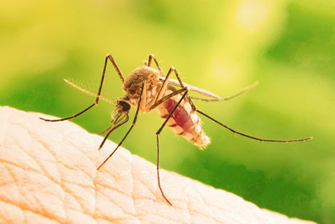 muggenbeet behandelen